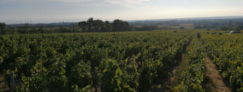 Beaujolais Nouveau Primeur Bistrot Neuf Wijngaard Wijn